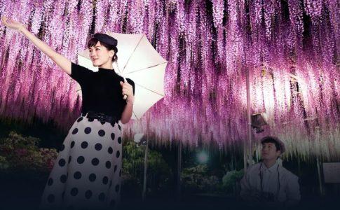 【今夜、ロマンス劇場で】加藤剛さんに号泣!感想や結末(ネタバレ)、キャストや主題歌、無料動画の視聴法を解説!