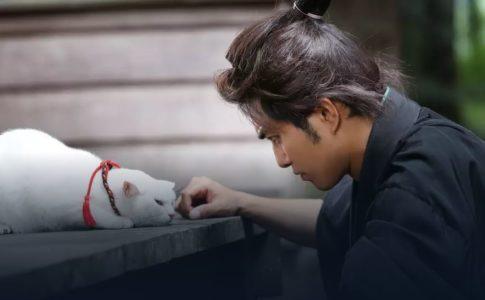 【猫侍】全シリーズ無料動画を視聴する方法!ロケ地、ストーリー、キャスト、スタッフを解説!